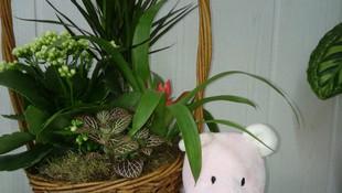Cesta plantas tradicional