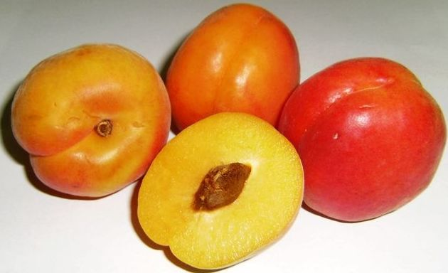 Exportación de frutas de hueso en Murcia