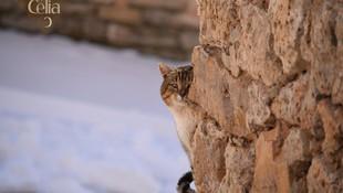 El Castillo de Celia lo guardan dos preciosos gatos
