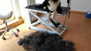 Cortes de pelo para perros en Terrassa