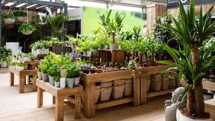 Dónde comprar plantas de interior y exterior en Ibiza