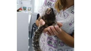 Veterinario para animales exóticos en Llíria, Valencia