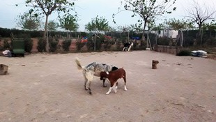 Residencia canina en l'Alcúdia