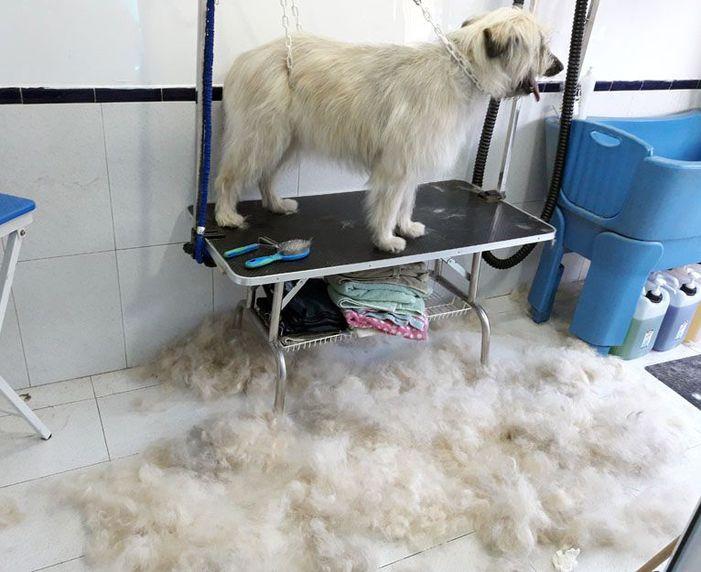 Cursos de peluquería canina en Xátiva