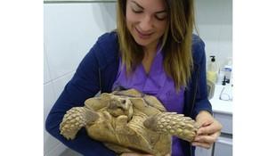 Veterinario especializado en animales exóticos en Llíria, Valencia