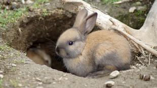 Control de conejos