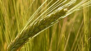 Cereales al por mayor en Albacete