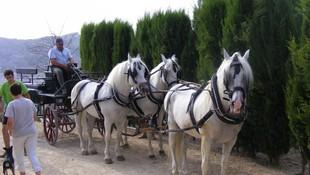 Carruajes de caballos en la Comunidad Valenciana