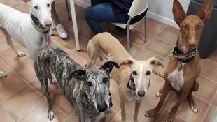 Clínica veterinaria en Caldes de Montbui