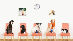 Rrgencias veterinarias 24 horas Getafe