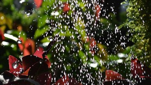 Riegos por goteo, aspersores y difusores