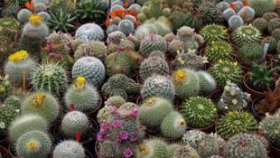 Muebles de jardín en Murcia