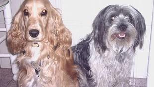 Tratamientos y radiografías para nuestros perros