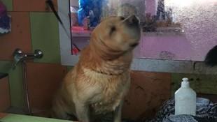 Peluquería canina en Las Palmas de Gran Canaria