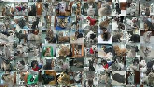 Collage Homenaje 25 años C.Veterinaria Getafe-Gracias por su cofianza.
