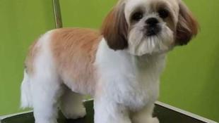 Profesionales en estilismo canino