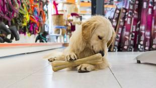 Clínica veterinaria y peluquería canina en Pineda de Mar