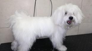 Peluquería canina San blas ( Antes )