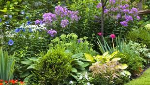 Todo tipo de trabajos de jardinería