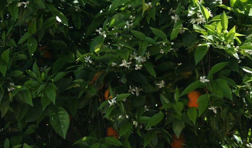 Venta de productos para jardinería Murcia