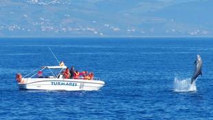 Avistamiento de delfín mular en Tarifa