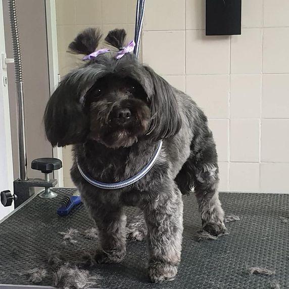 Usamos los mejores productos de peluquería canina