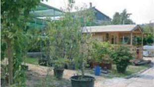 Vivero de plantas en Ourense