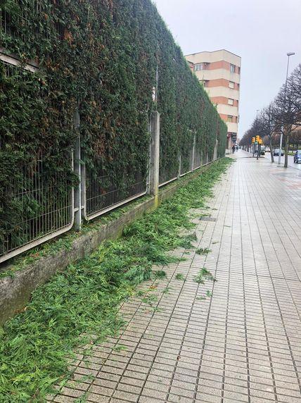 Poda en Gijón