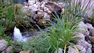 Decoración de jardines en Valencia