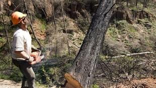 Especialistas en ala de árboles en Barcelona