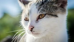 Tratamientos homeopáticos para animales en Burgos