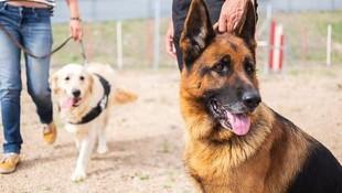Adiestramiento canino en Tenerife