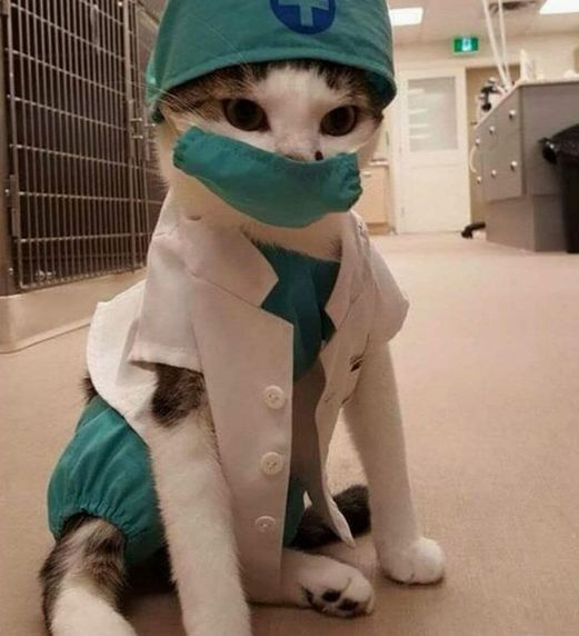 doctor gato