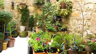 Plantas de interior y exterior en Tafalla